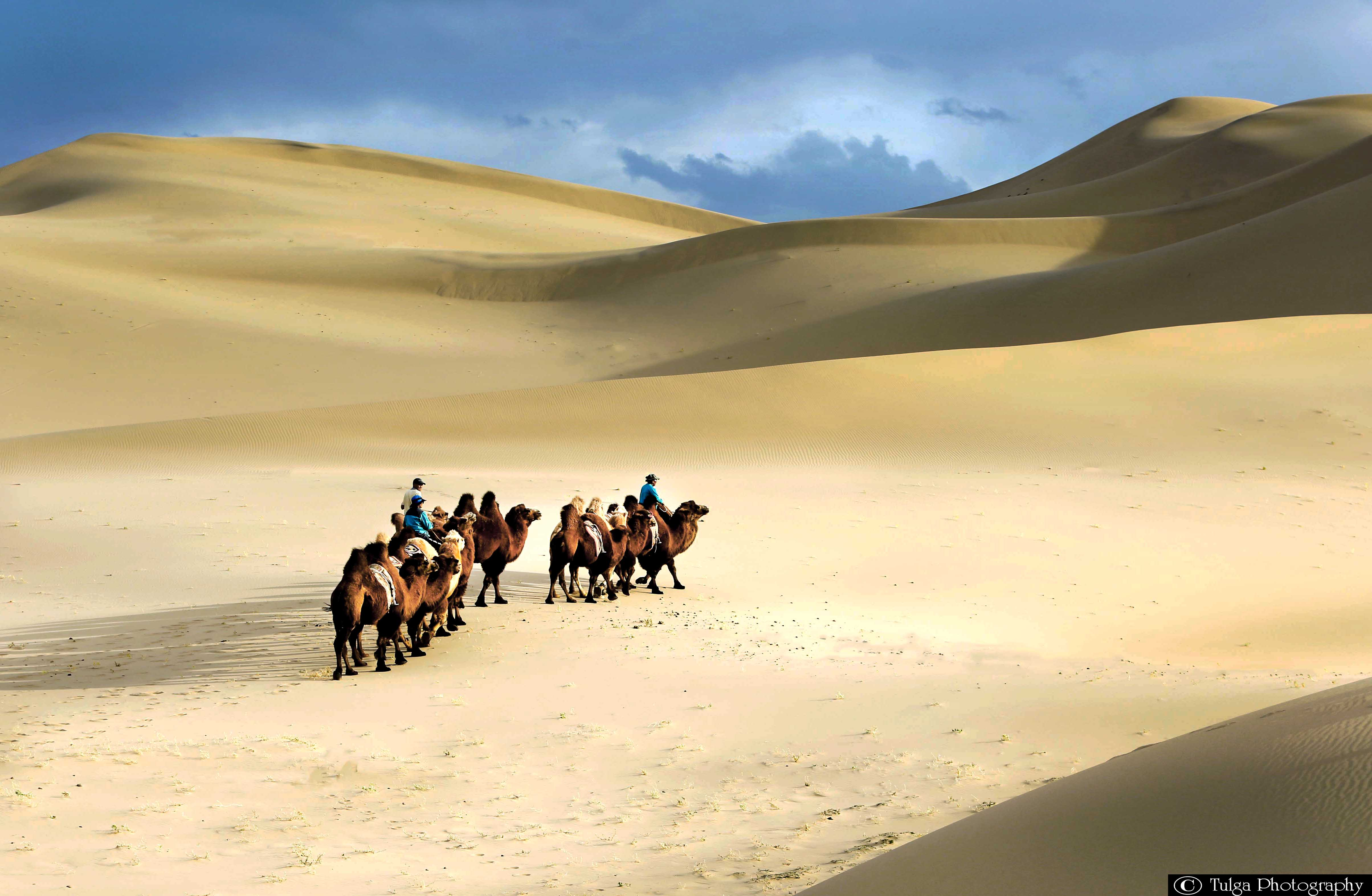 Gobi Photography Tour