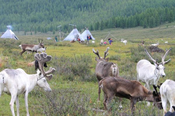 Reindeer Herder Visit