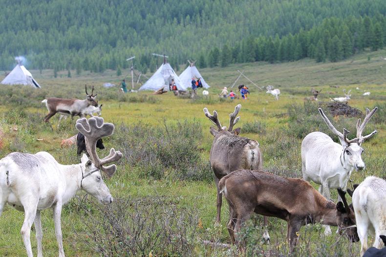 Reindeer Herders place -Taiga