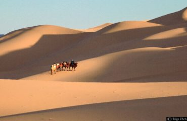 Gobi with Camel caravan