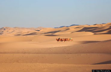 Gobi with Camel caravan1