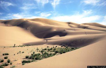 Sand Dune 111