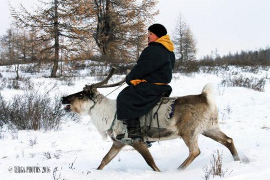 buayn-ulzii-reindeer-herder