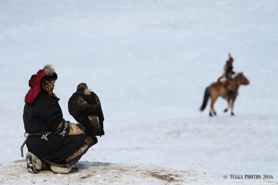 golden-eagle-is-setting-off