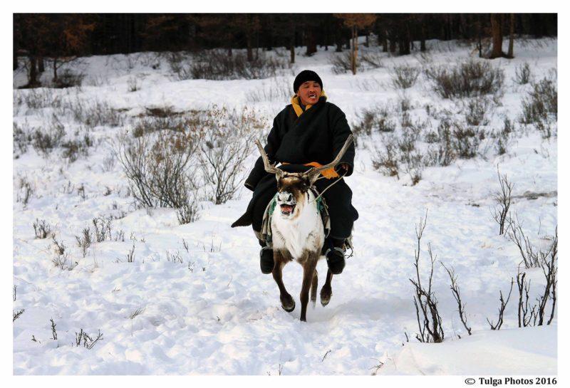 riding-reindeer-taiga