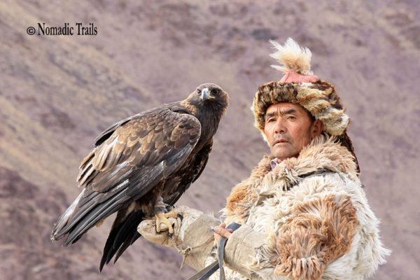 Cover--Golden-eagle2