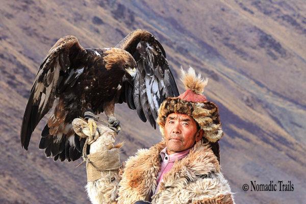 Cover--Golden-eagle3