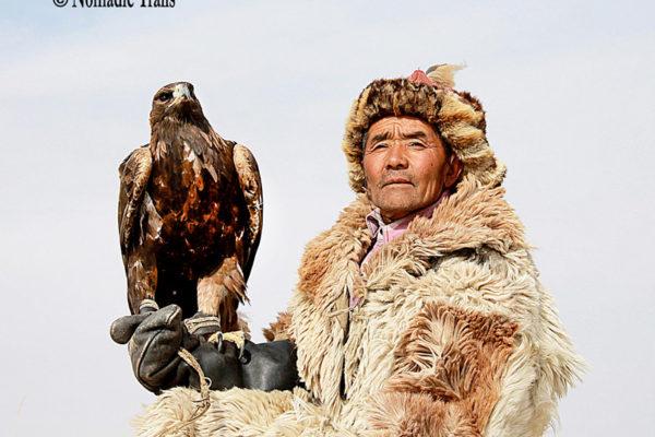 Cover--Golden-eagle5