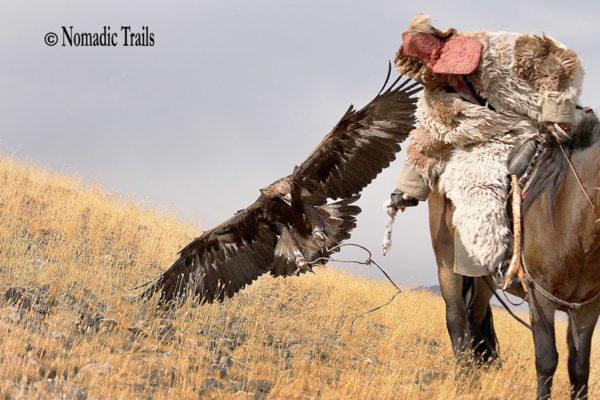 Golden-Eagle-landing-1