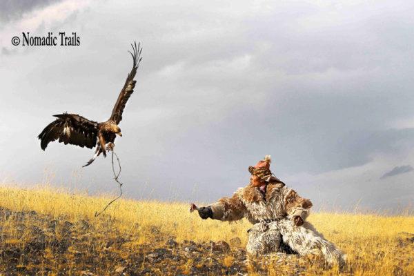 Golden-eagle-is-Landing-11