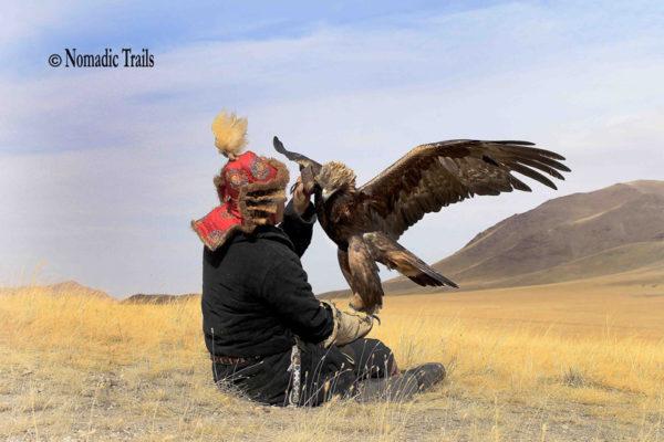 Golden-eagle-refuses