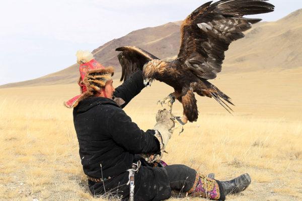 Golden-eagle-refuses4