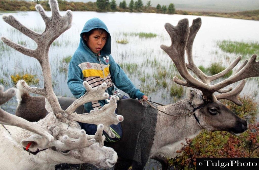 Tsaatan Reindeer boy