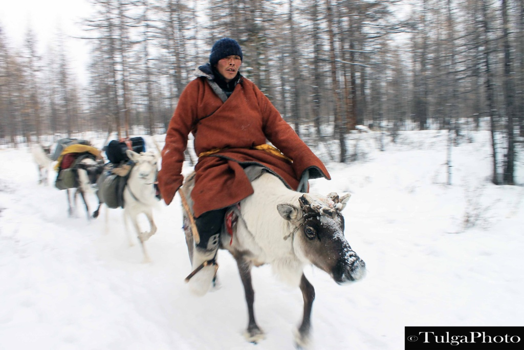 reindeer herder1