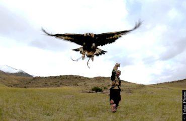 Eagle Master