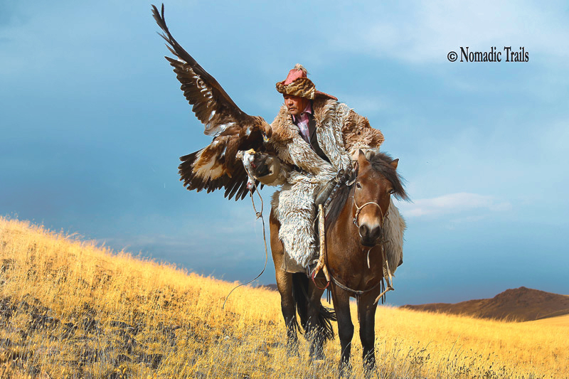 Golden Eagle Hunter/ Master